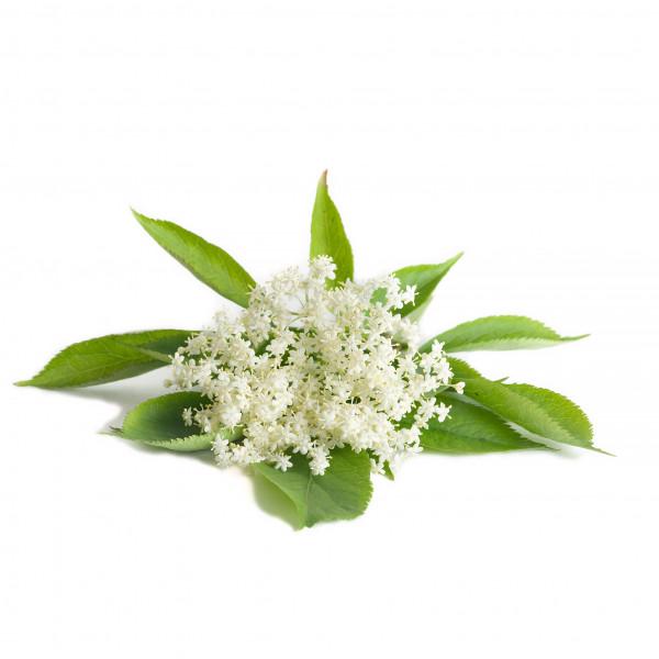 Holunderblüten Aroma