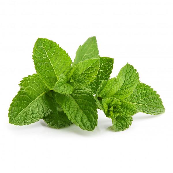 Bushy Mint flavour